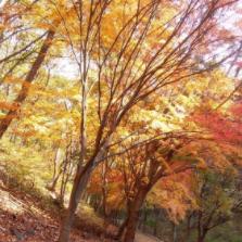 가을의 막바지