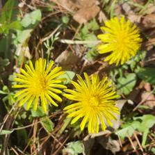숨은 꽃 찾기
