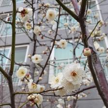 봄이 오나 봅니다...